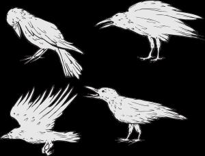 vector-crows_fJzUs_I_