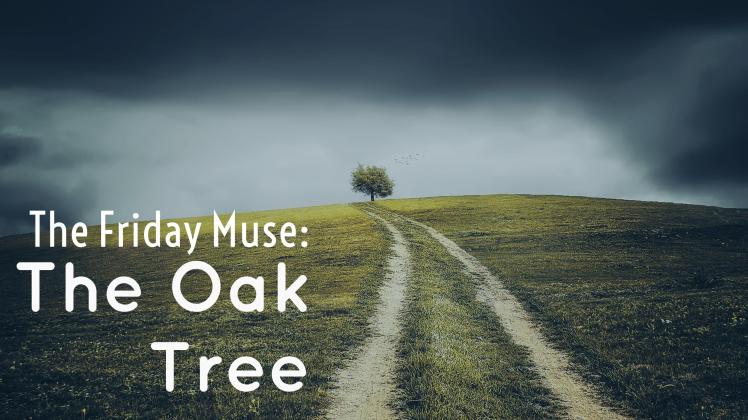 tfm-oak-tree-blog-panel